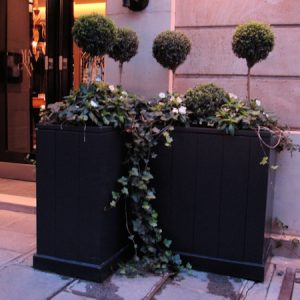 Rent plants for events