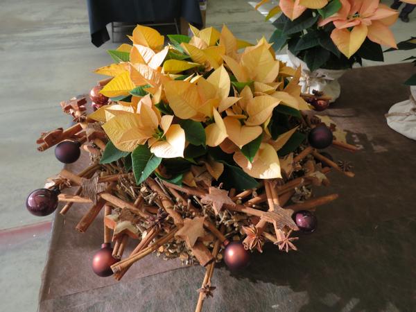 Poinsettia Navidad