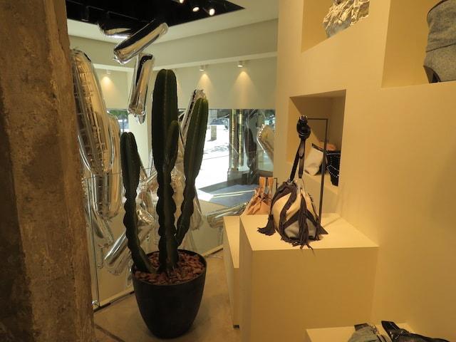 Alquiler de cactus