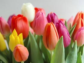 Tulipán para ramo de novia