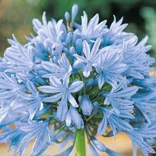 Flores para Ramo de Novia