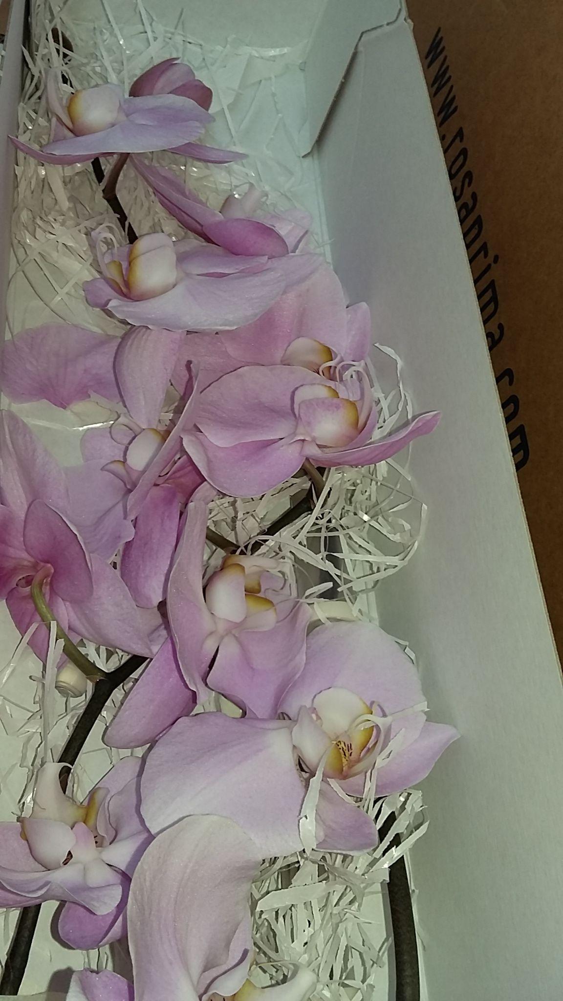 Orquídeas en Boda