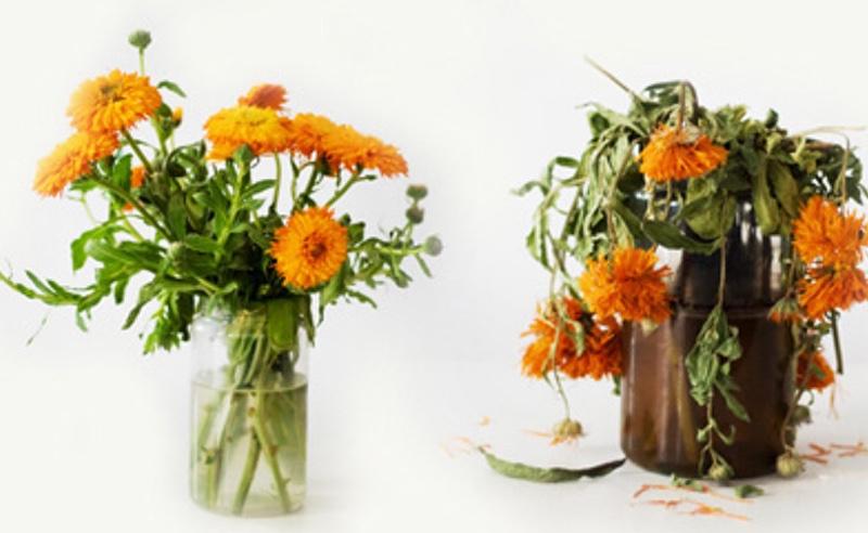 Conservar flores