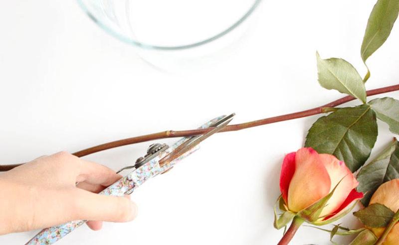 ¿Cómo conservar tus flores naturales?