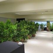 Alquiler de plantas naturales en Girona