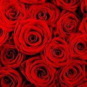 Cómo mandar flores el día de San Valentín
