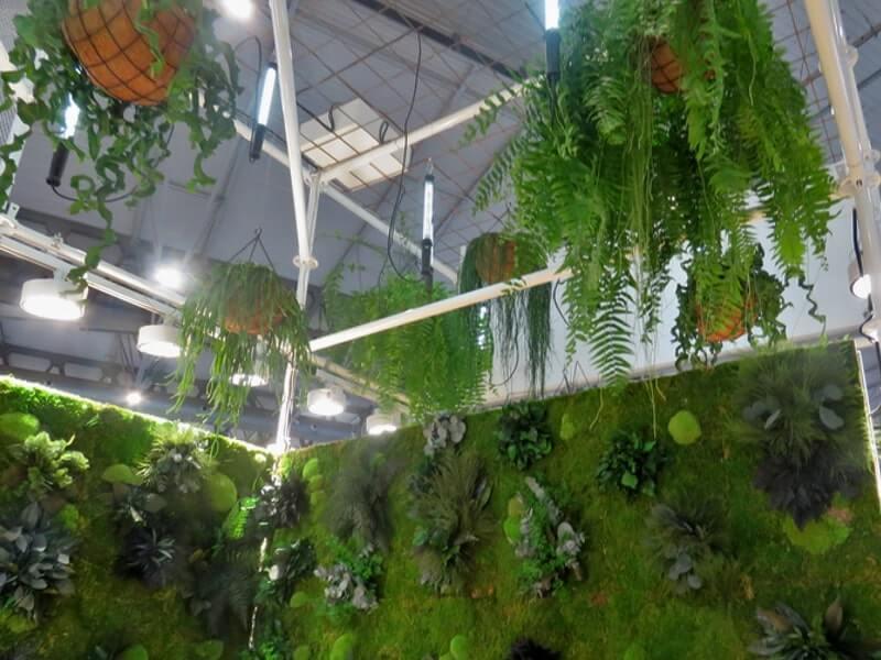 Alquilar plantas naturales